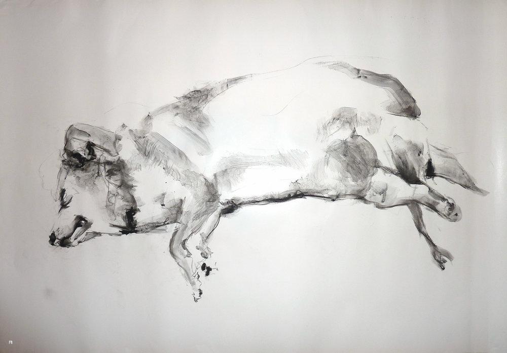 dog4print04.jpg