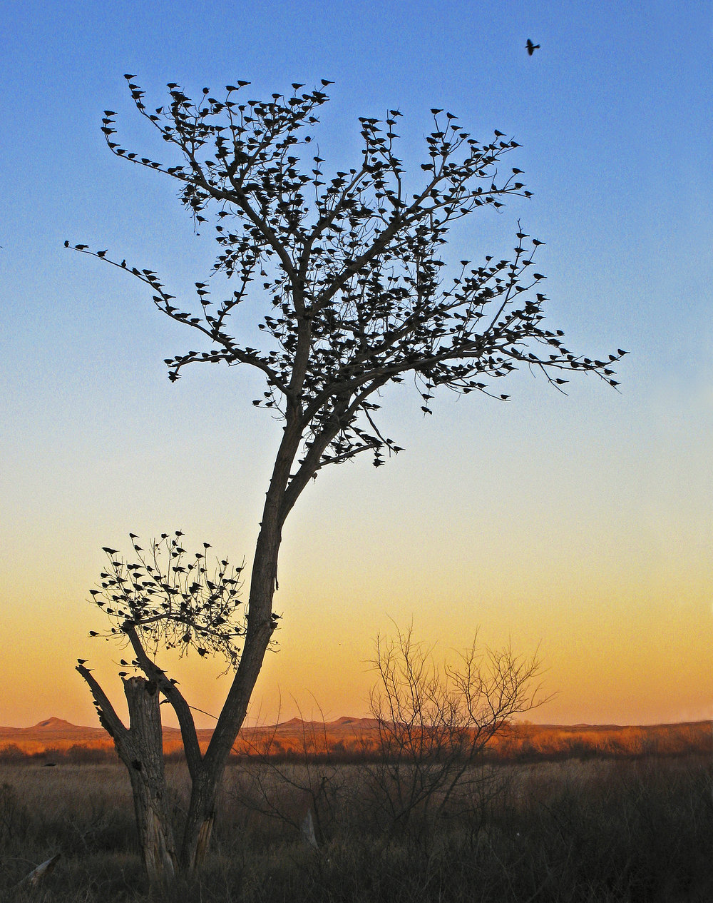 1 - Tree