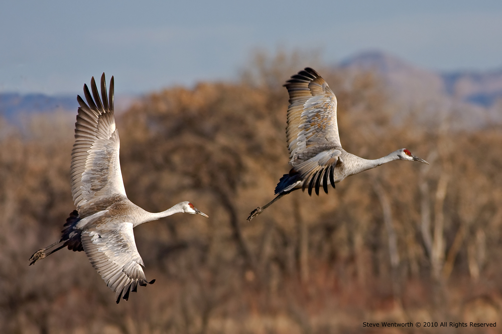 11 - birds