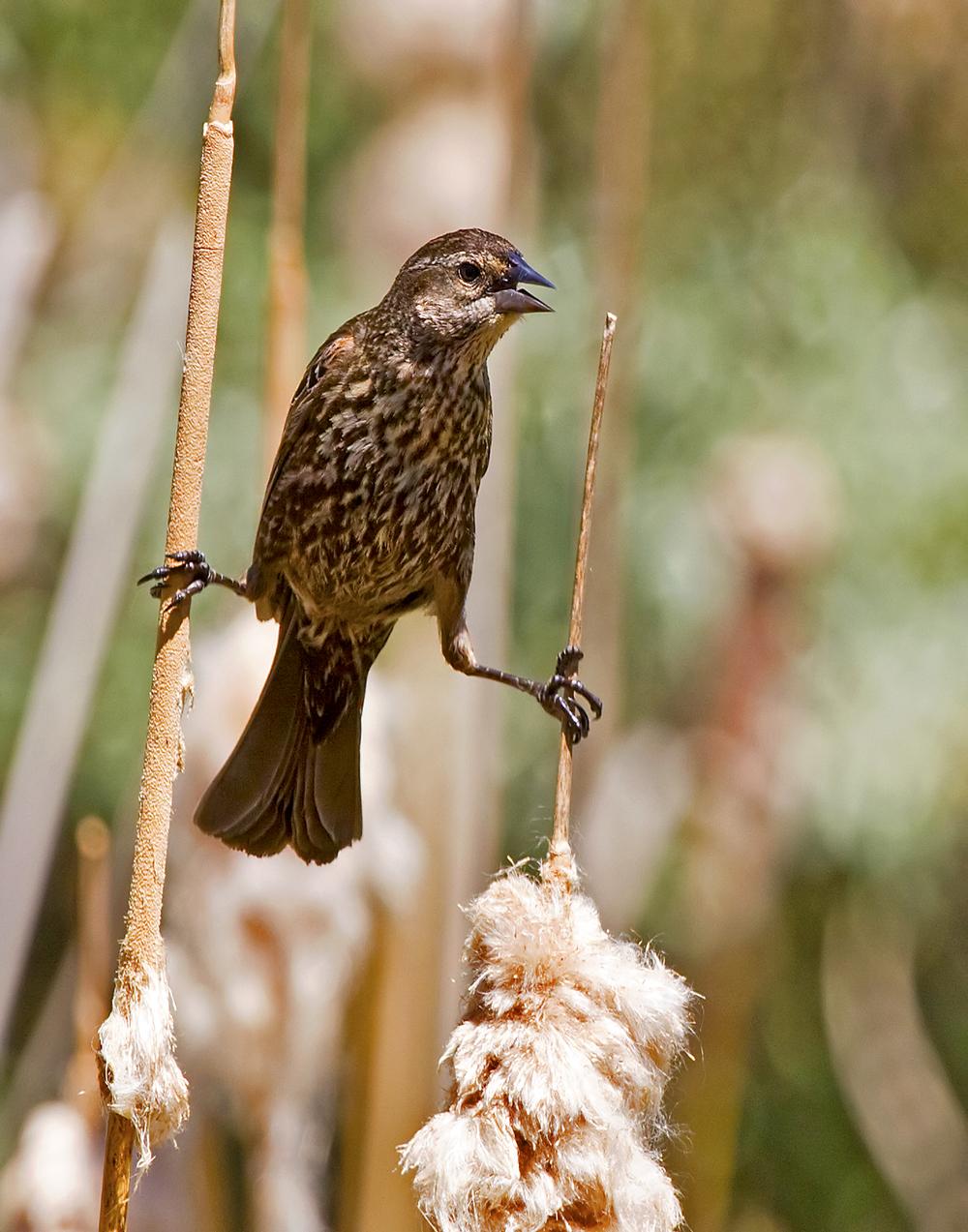 33 - Bird