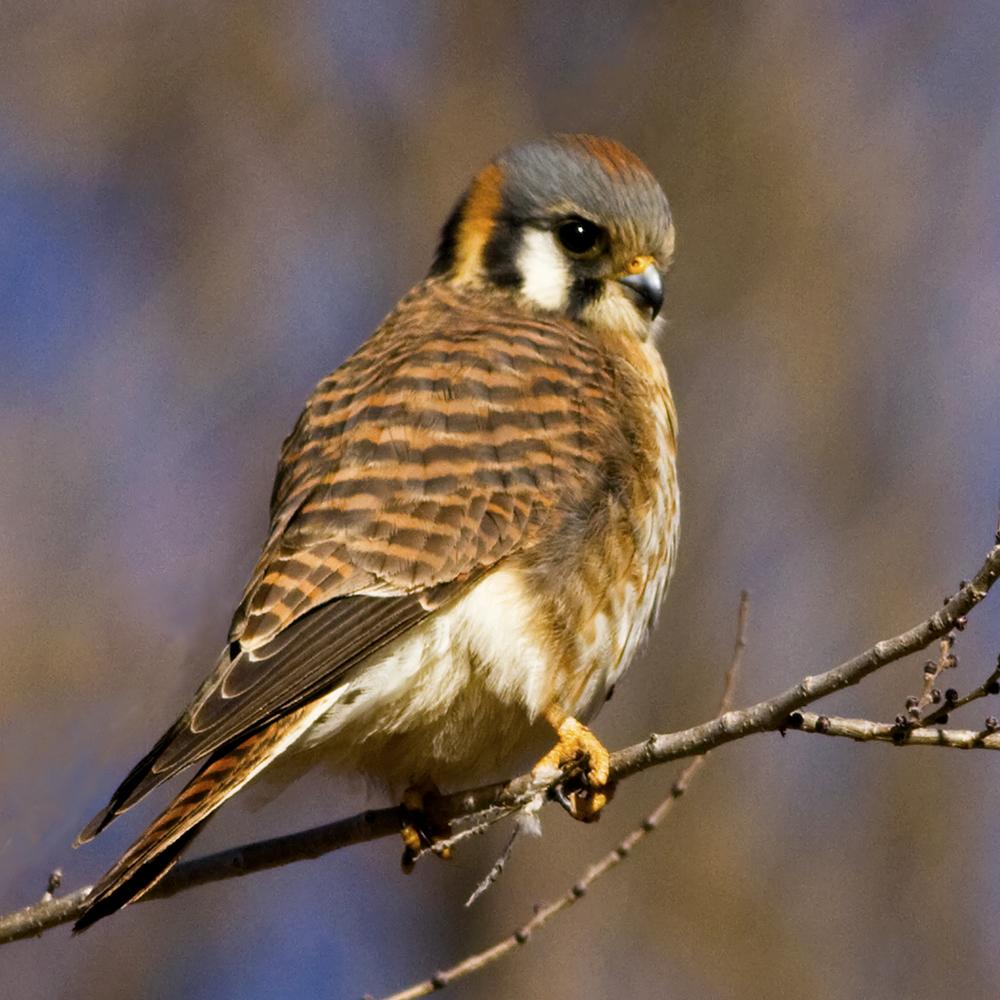 70 - Bird