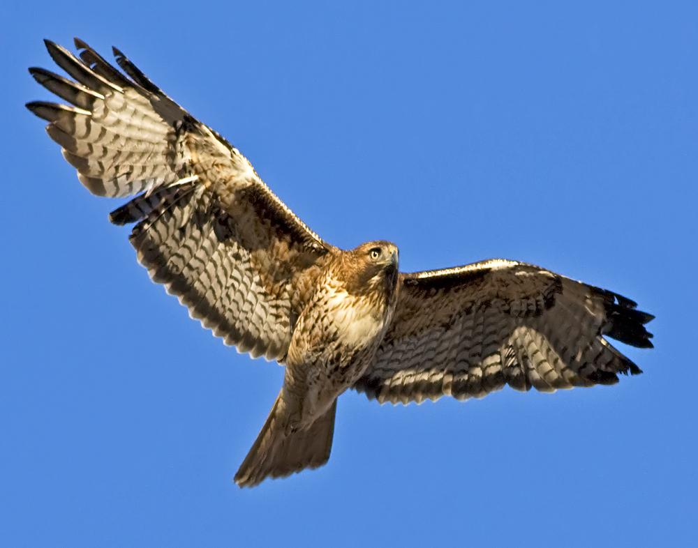 71 - Bird