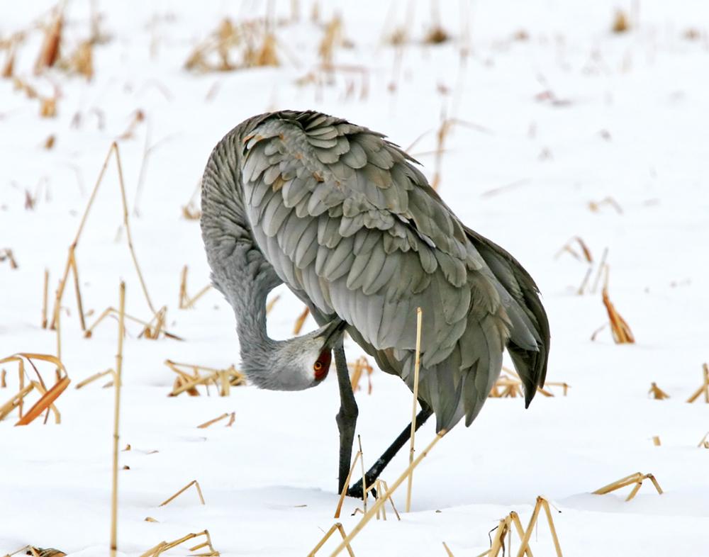 75 -Bird