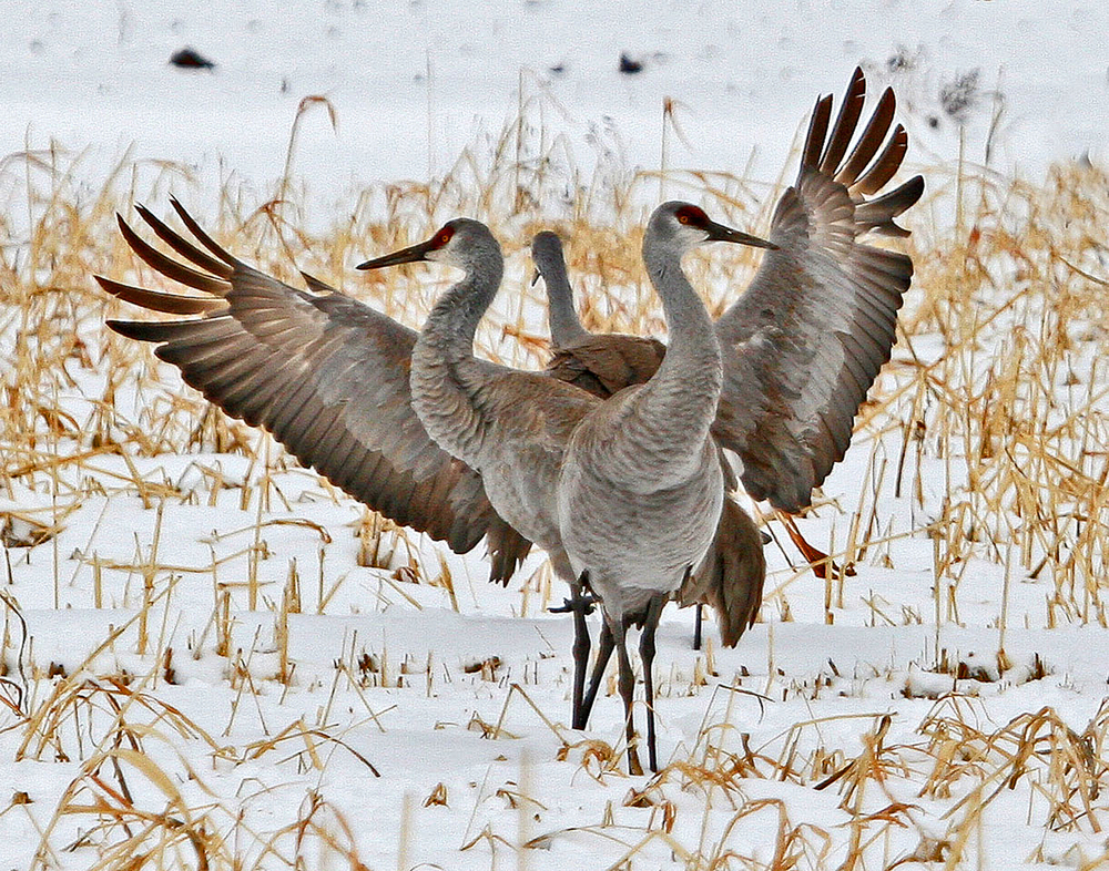 78 - Birds