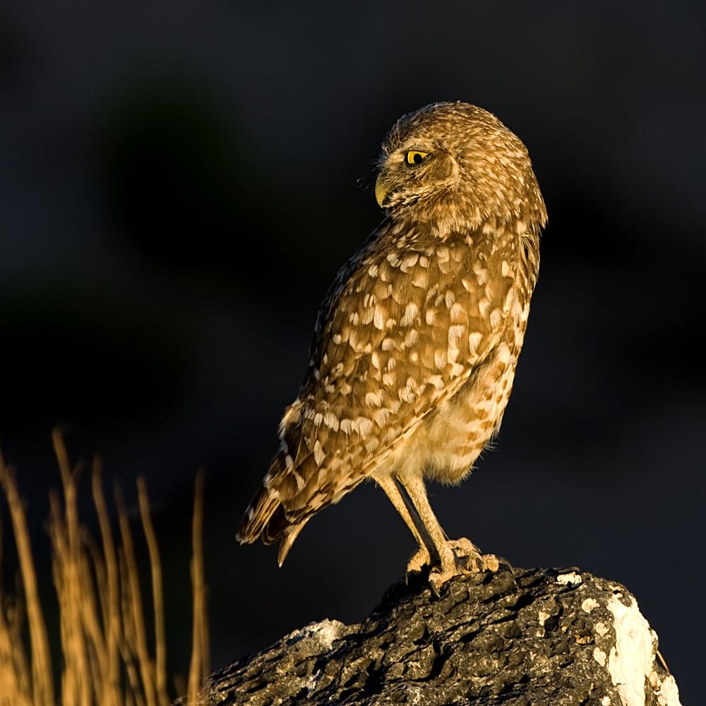 82 - Bird