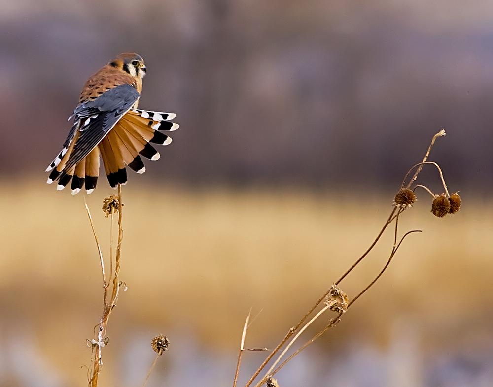 93 - Bird