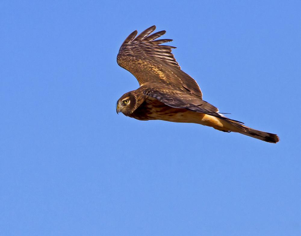 108 - Bird