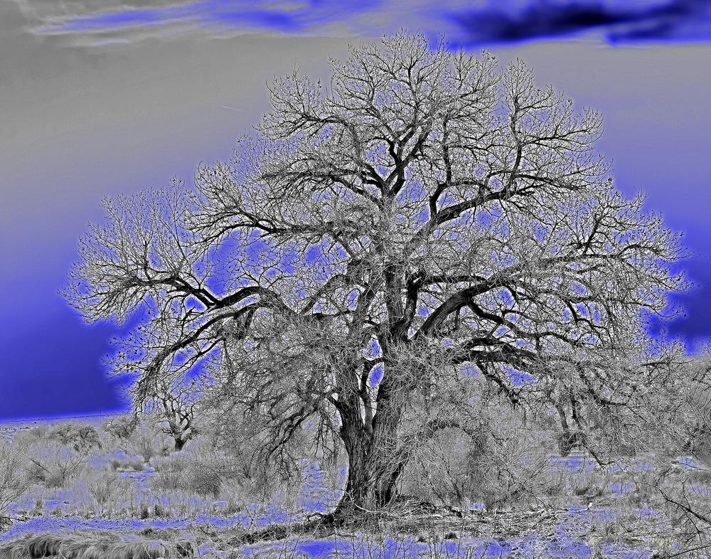 109 - Tree