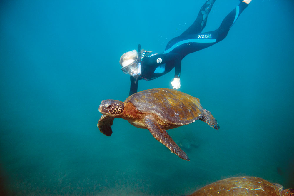 snorkeling is an integral part of every galapagos cruise