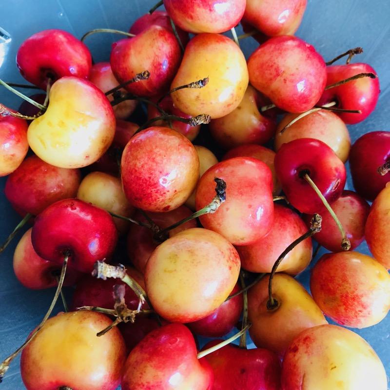 rainier cherries.jpeg