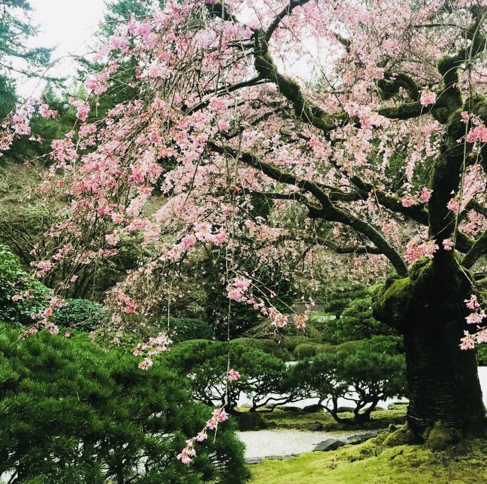 photo by  @leeanne.cs  • Portland Japanese Garden