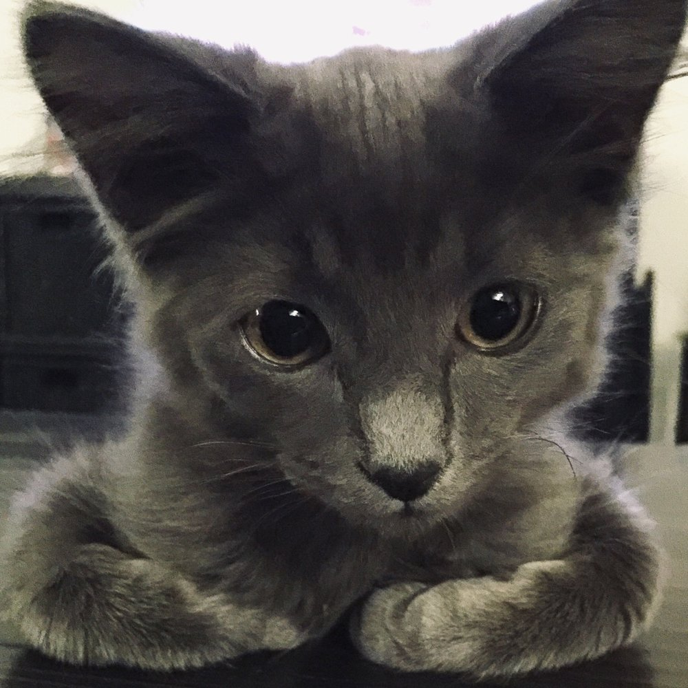 In our perception, Bear was a very cute kitten.