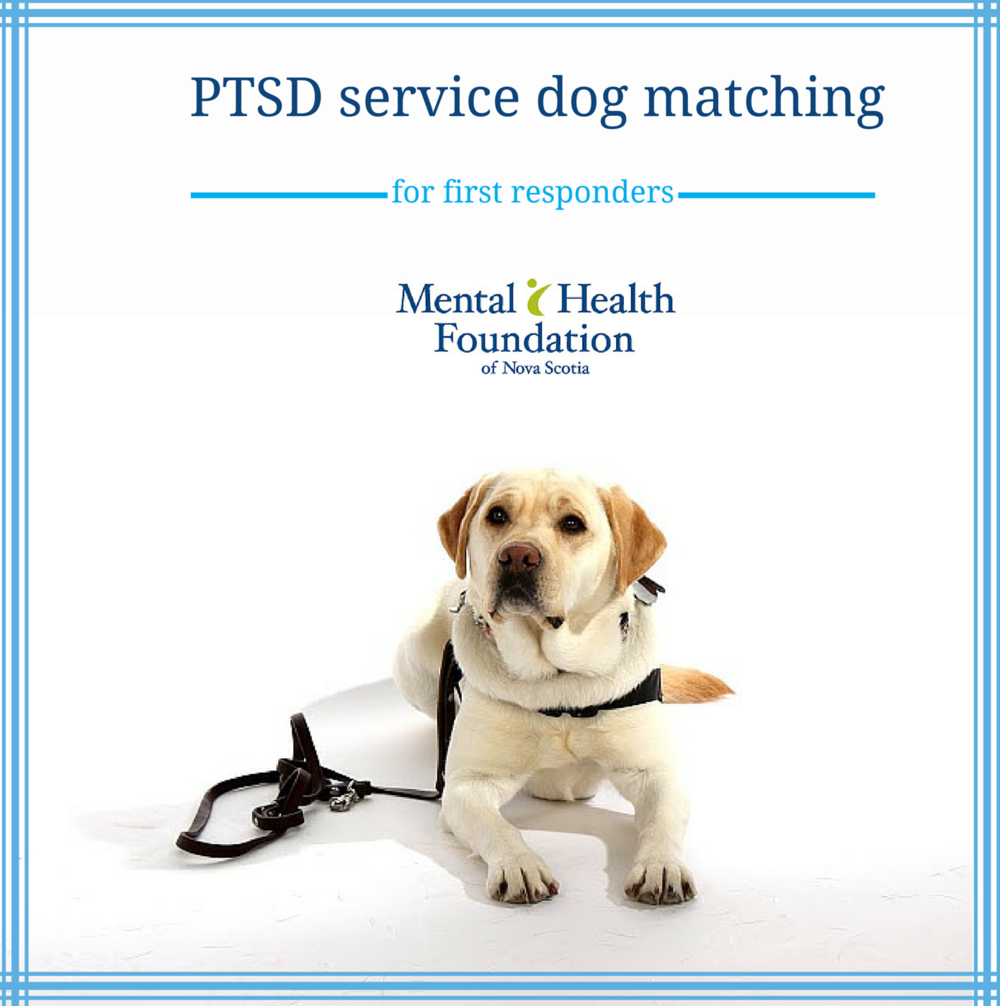 Ptsd Service Dog Matching Mental Health Foundation Of Nova Scotia