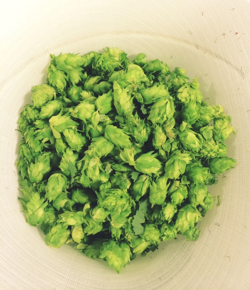 Natty Greene's uses Chinook Hops. Hops are the female flowers of the hops plant and have a spicy, herb-like aroma.