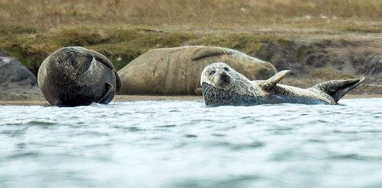 1111harbour-seals-teesside-1-752-x-371.jpg