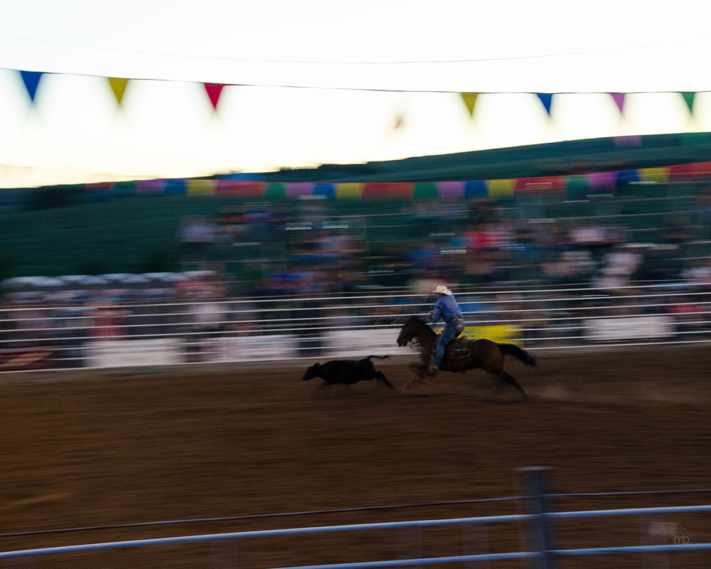 Tie Down Roping on the Run.  Longford Rodeo 2014