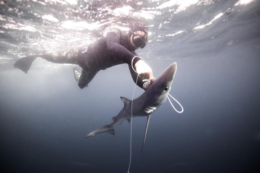 """El proyecto de """"Al llamado del Tiburón"""""""