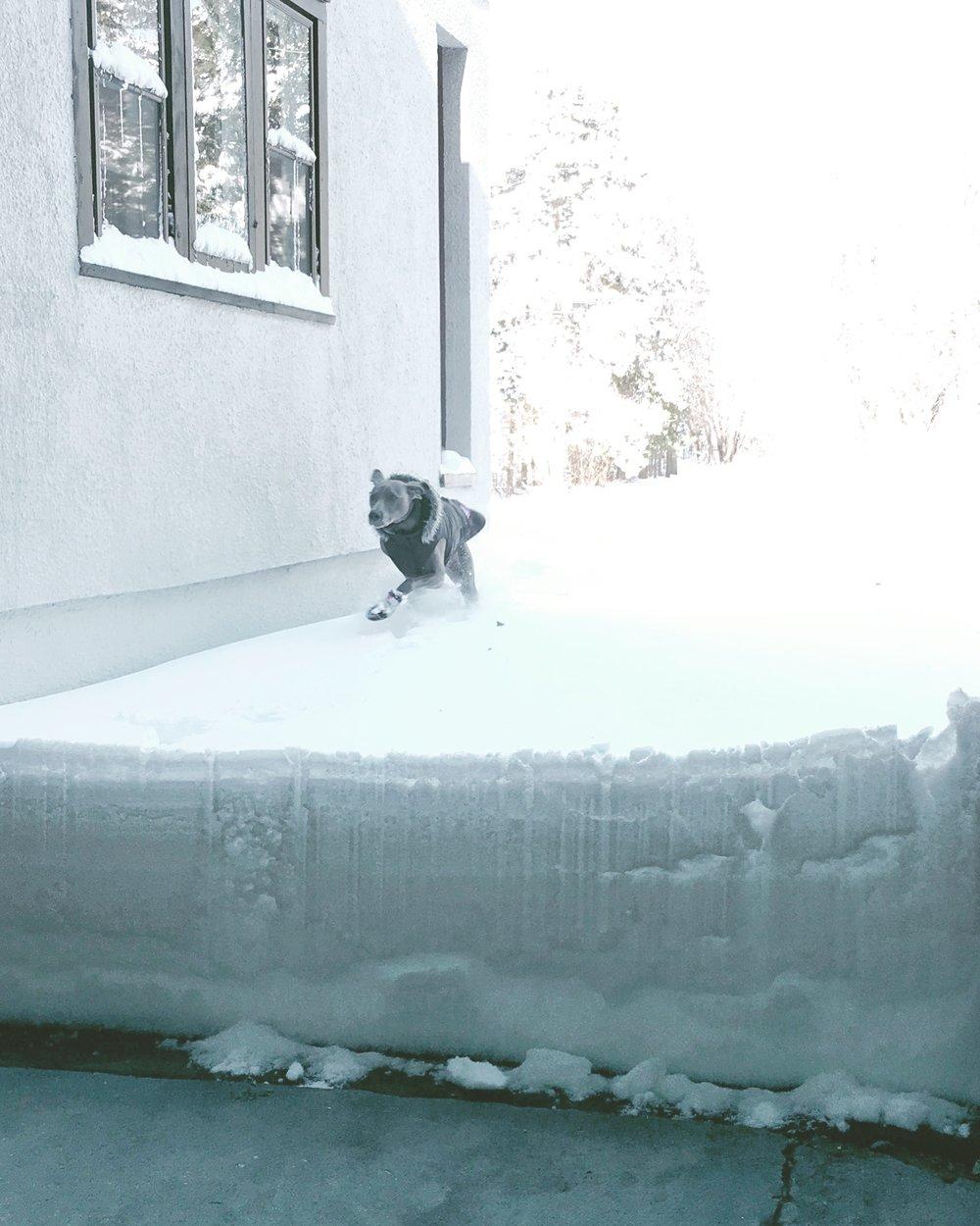 We got a lot of snow