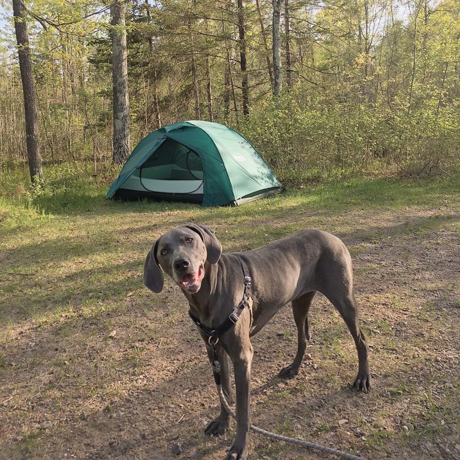 Took Jax camping