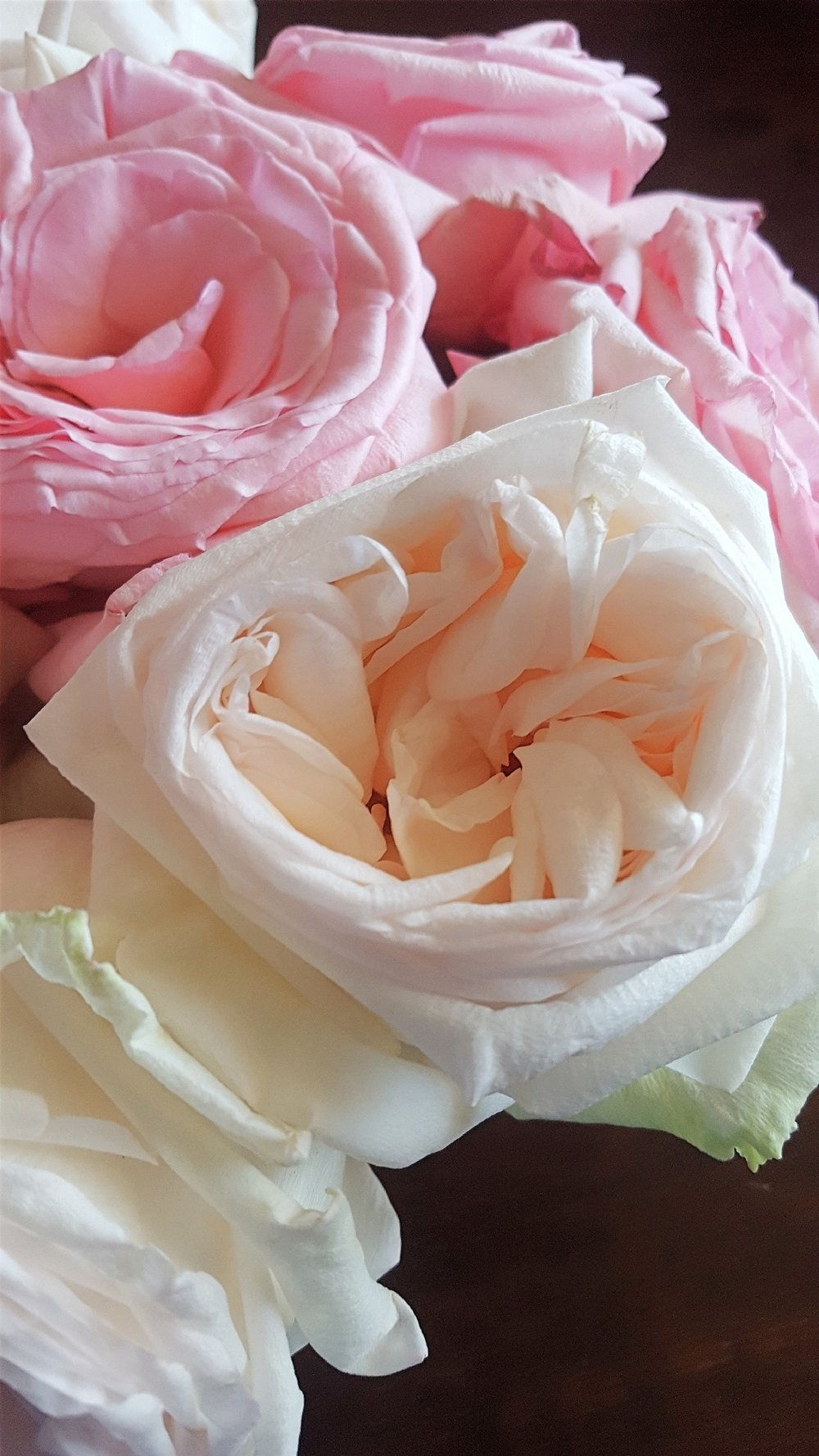 pink blush garden roses.jpg