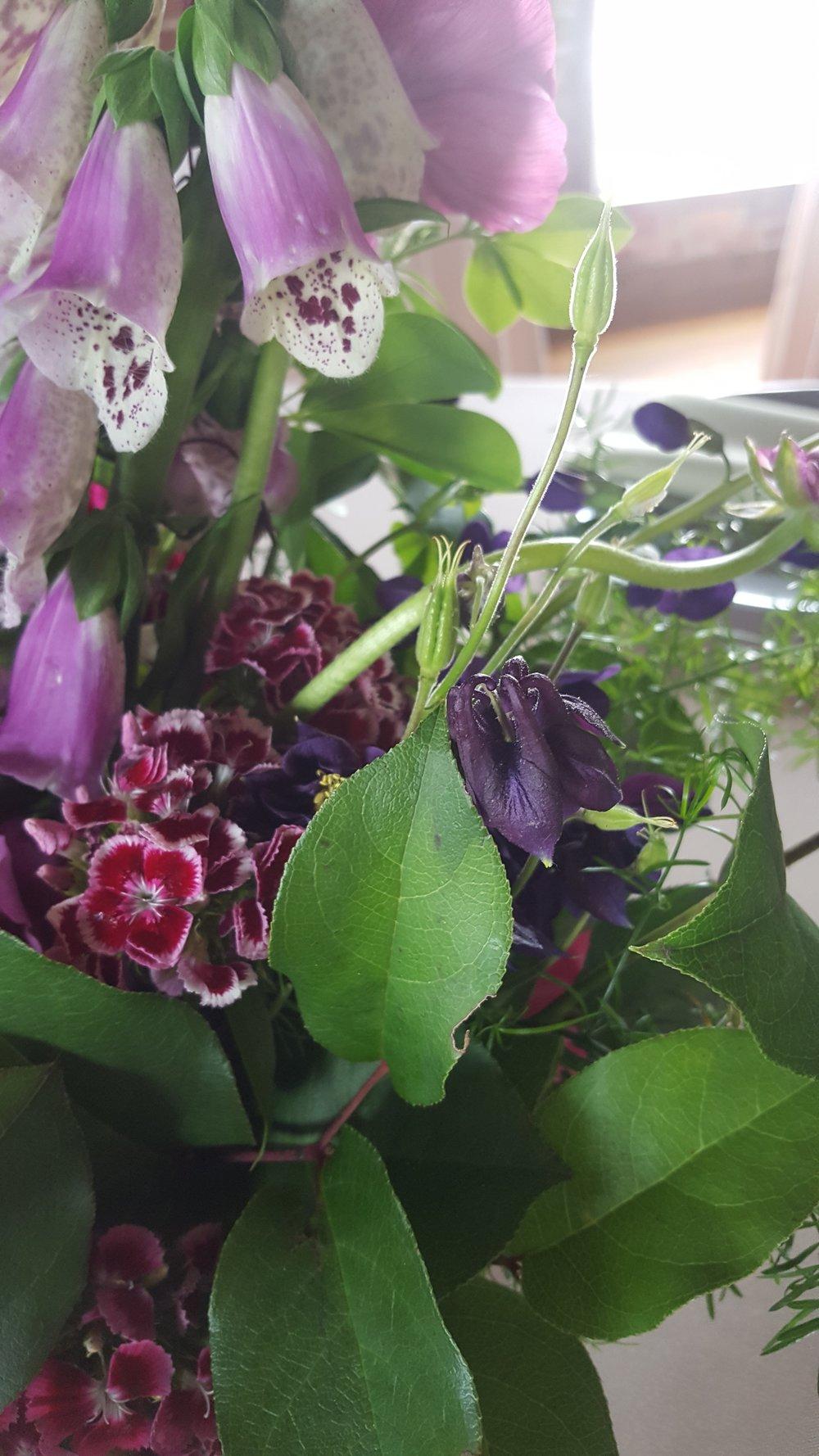 wildflowers foxglove columbine