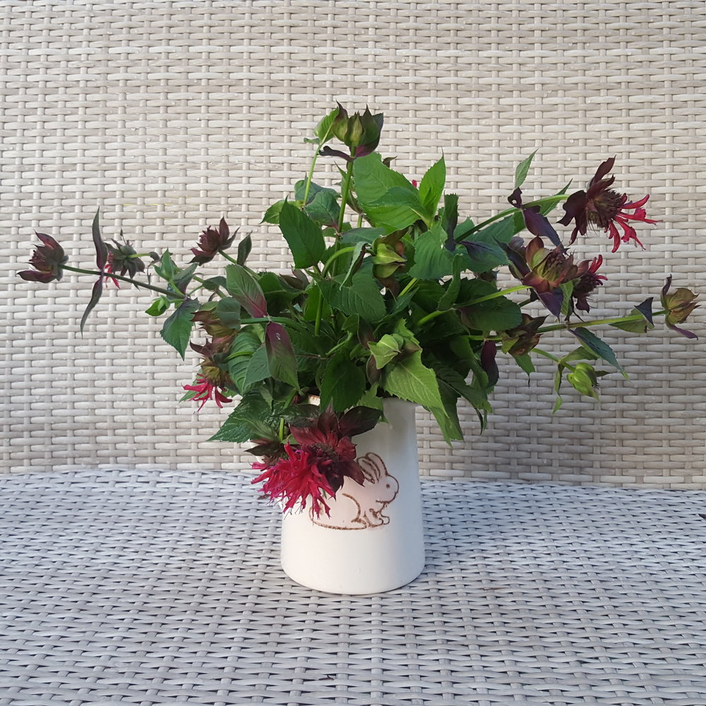 bee balm in a pitcher