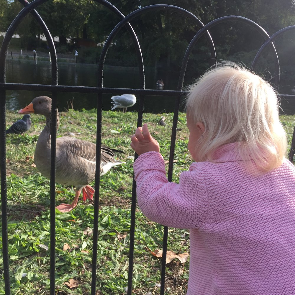 The many parks, and their many, many birds were a huge hit.