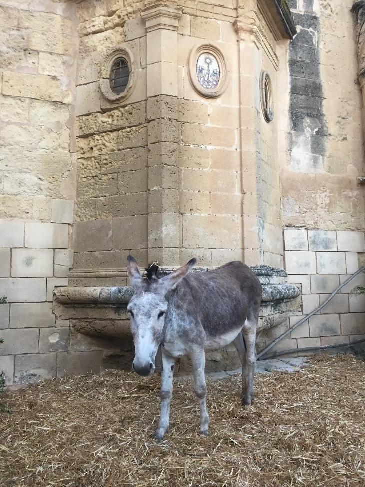 donkey_web.jpg