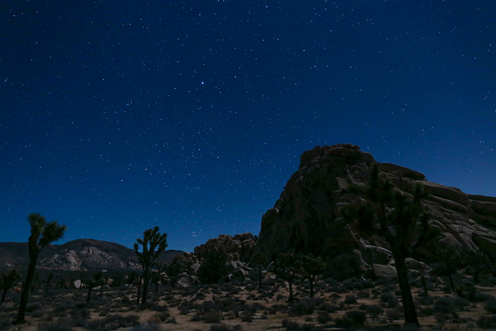 Stargazing at Night in Joshua Tree National Park