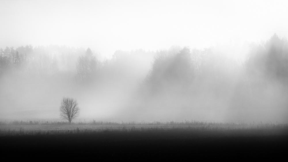 fogfrontofforest_TeemuOksanen