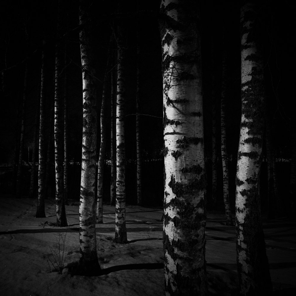 birch_night_TeemuOksanen.jpg