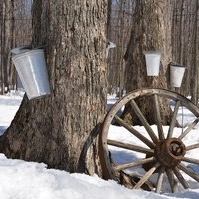 maple-syrup-1169896_1280.jpg