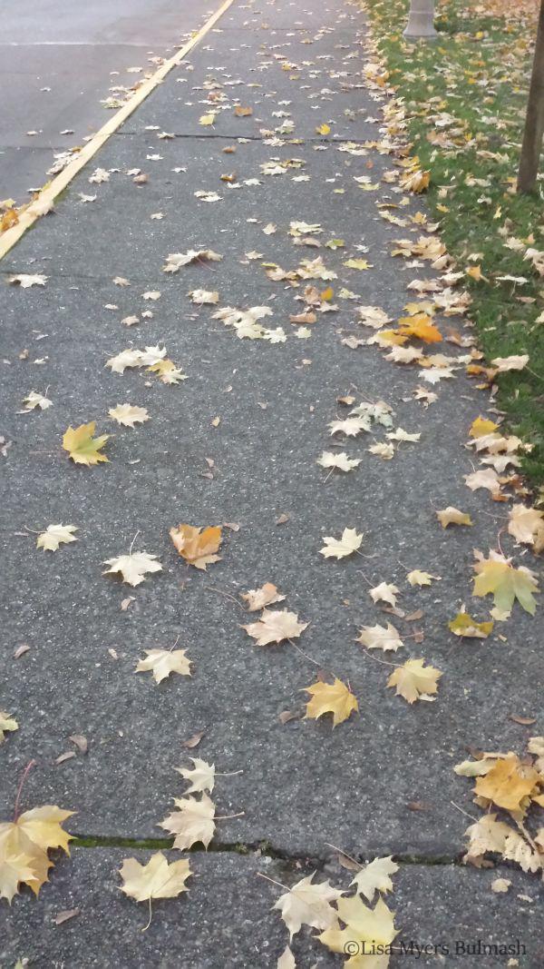 gratitude-leaves-stars copy.JPG