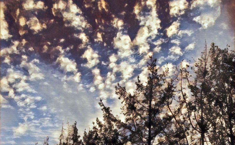 fall sky - Copy.jpg