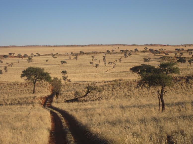The beautiful Namib!