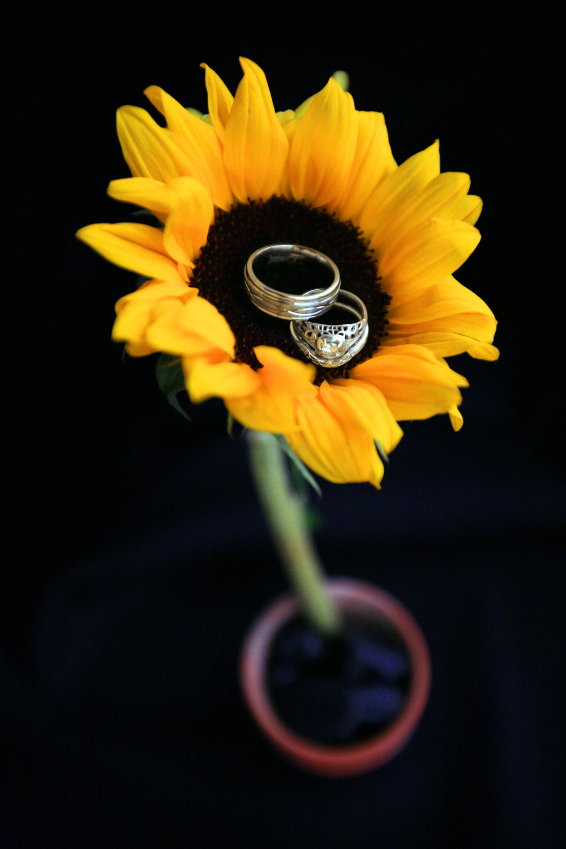 wedding singles 0004.JPG