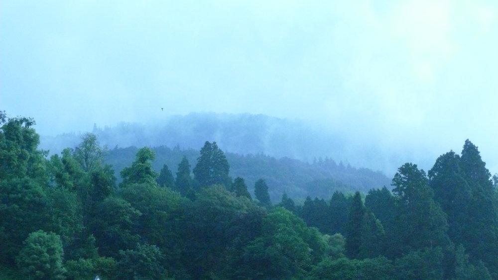 black rain forest.JPG
