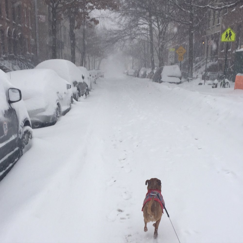 January snowstorm!
