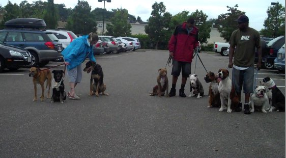 Only 9 dogs? Must've been a slow day...