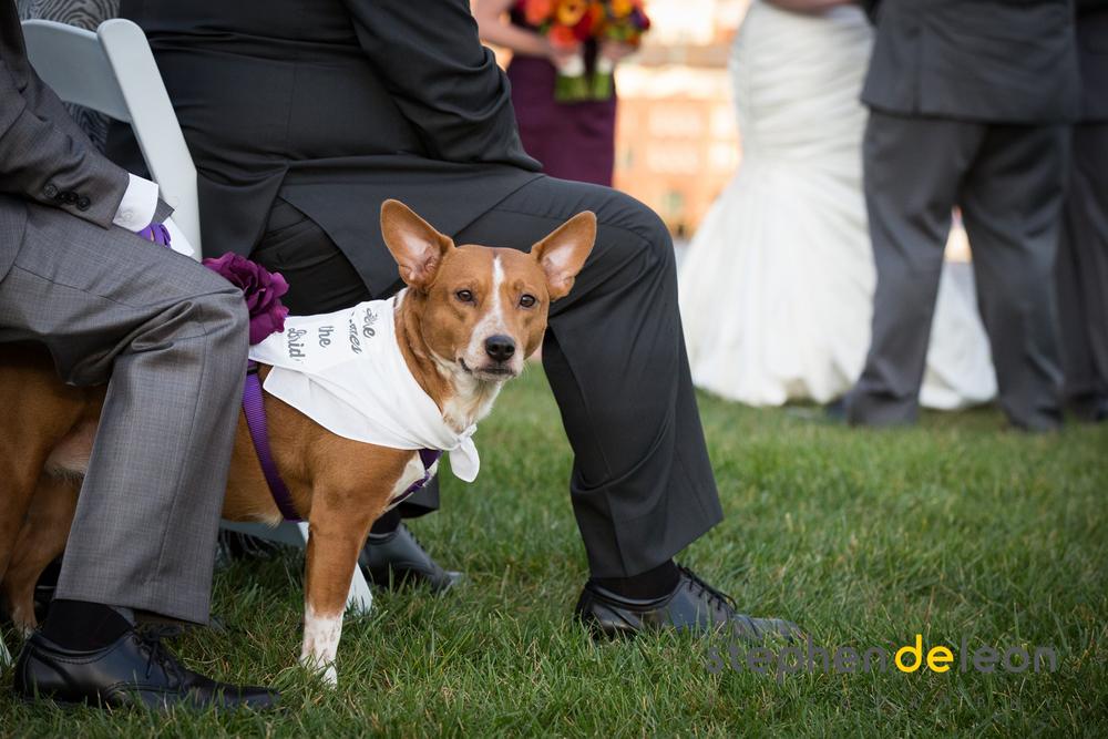 Baltimore_Wedding_49.jpg