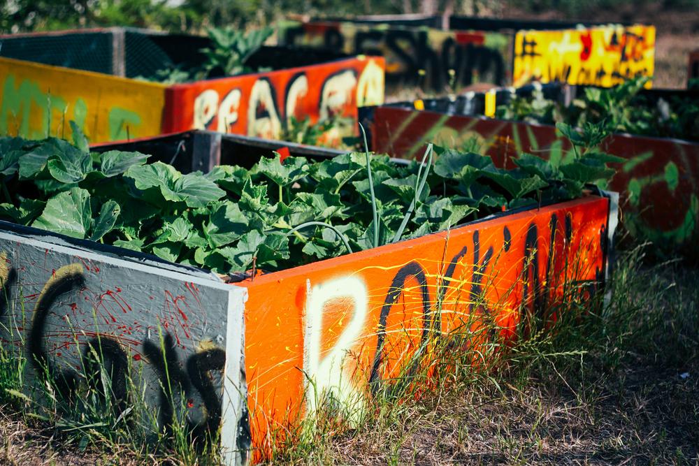 farm6-X3.jpg