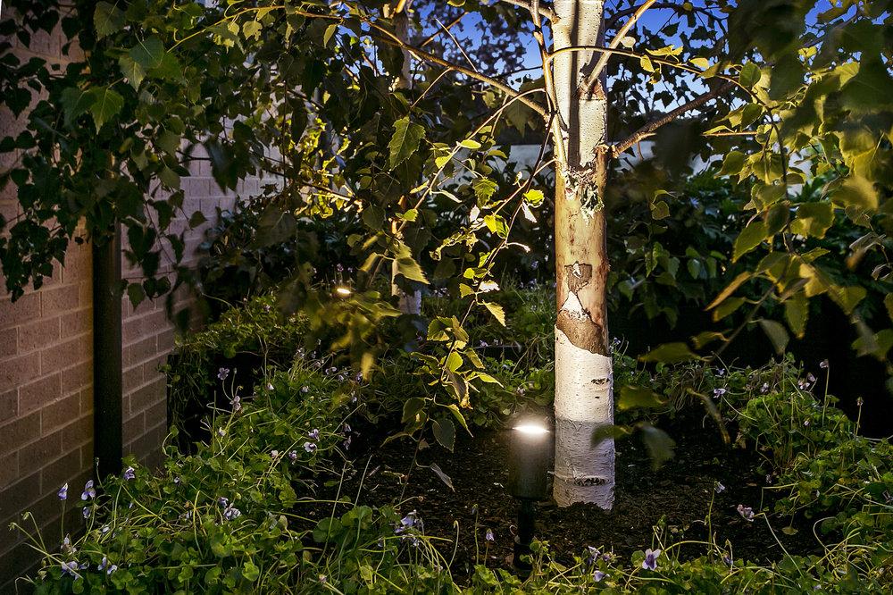 Feature Garden Lighting