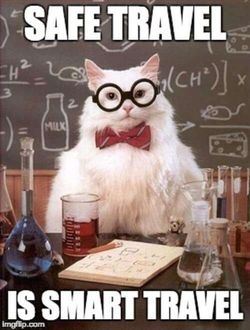 smart+cat (1).jpeg