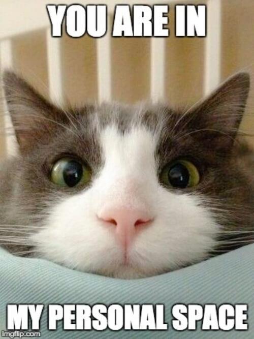cat+meme (1).jpg