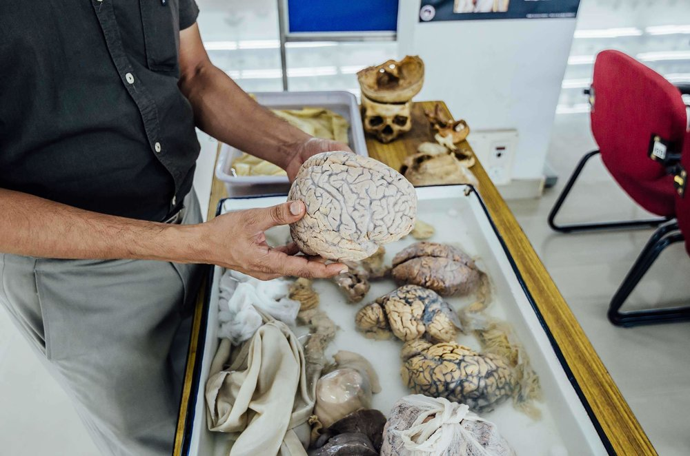 brain bank1 (1).jpg