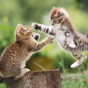 Competitive cats.jpg