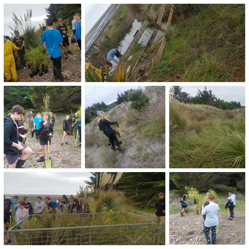 Sand dune planting - The group ended their day planting hundreds of native trees along the kuku beach. The effort expended was well appreciated by the iwi group as together we each play our part in protecting our environment.