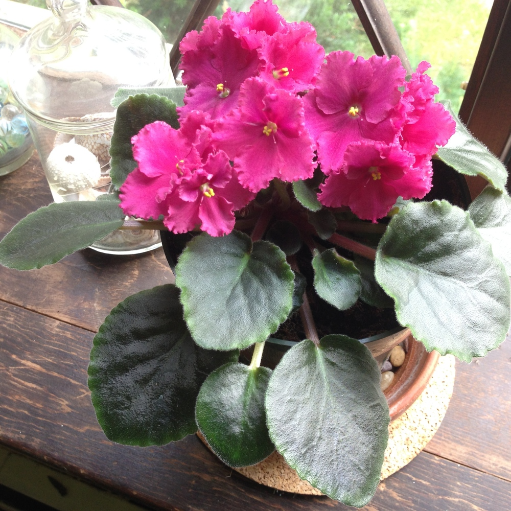 Browse our listing of adoptable plants near you.
