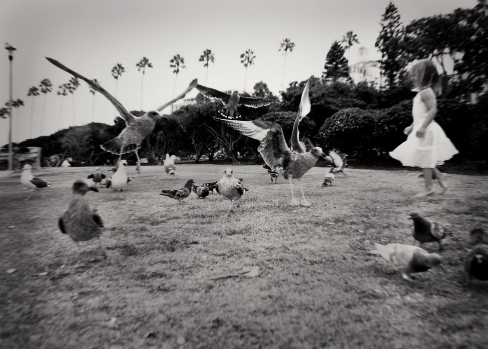 chasinggulls.jpg