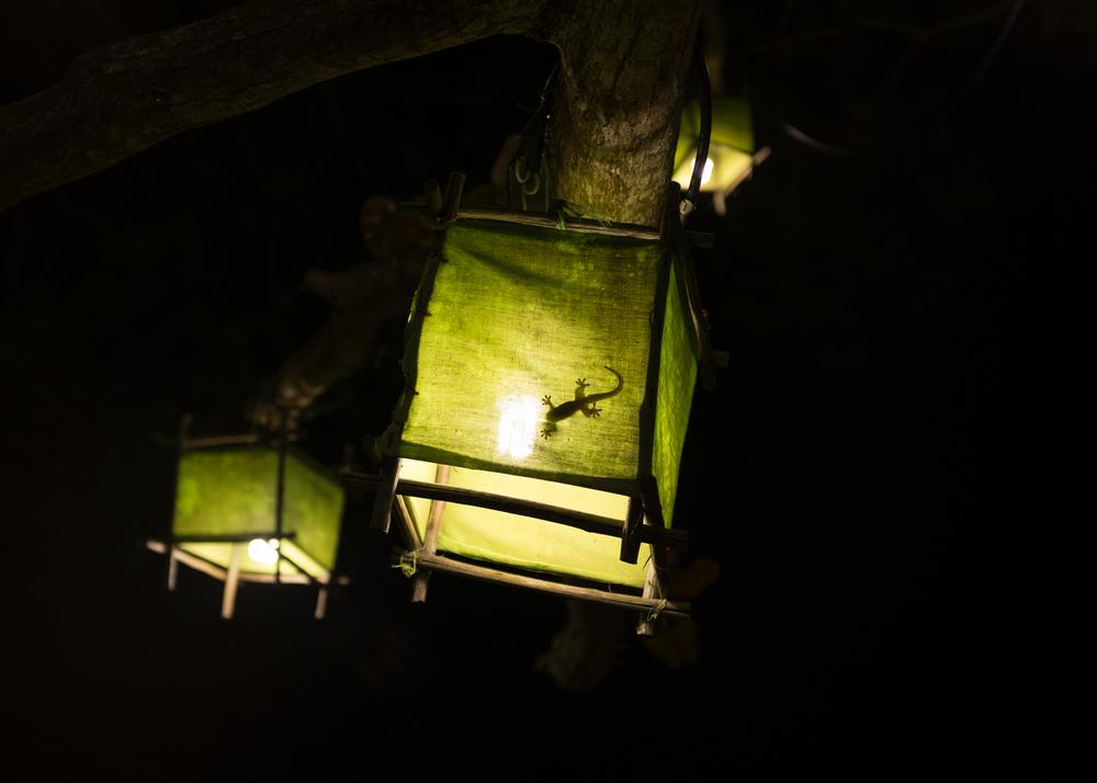 Lizard, Thailand, 2015